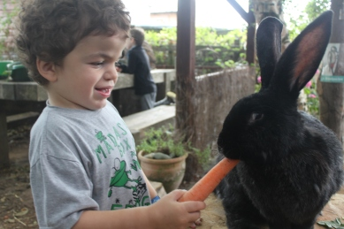 Pudding sticking a giant carrot into a giant black rabbit's mouth